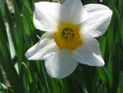 Spring2_copyright07_kh