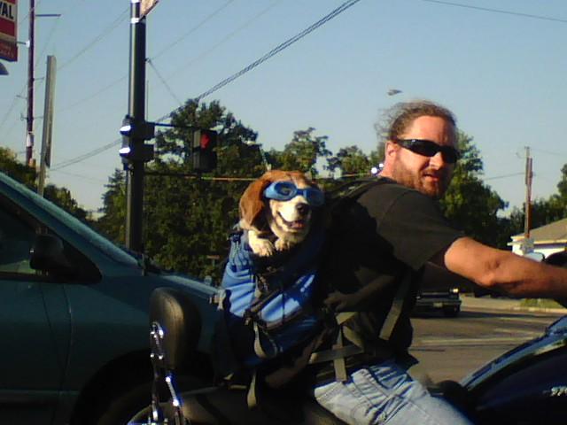 Humour Dog_on_bike